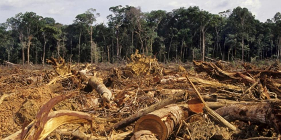 1359_deforestation_amazon_1024x667_1_460x230.png (980×490)