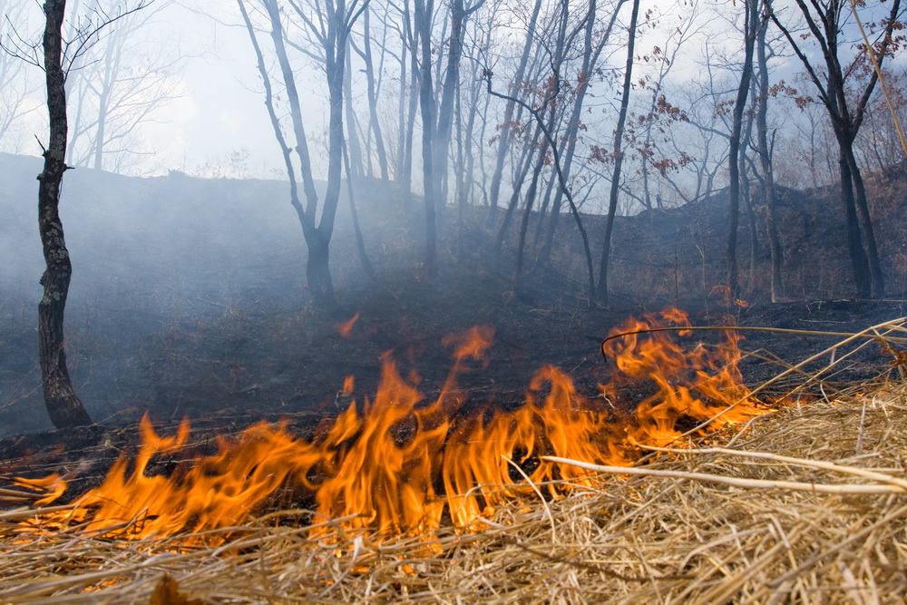 During the autumn spring fire season of 2008-2009 one third of south-west Primorye was lost in fires.