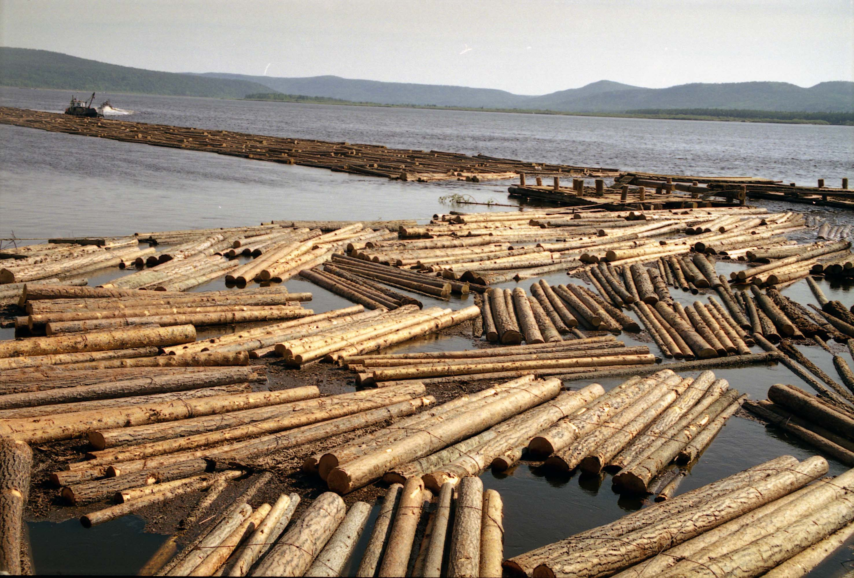 Russian wood industry 41