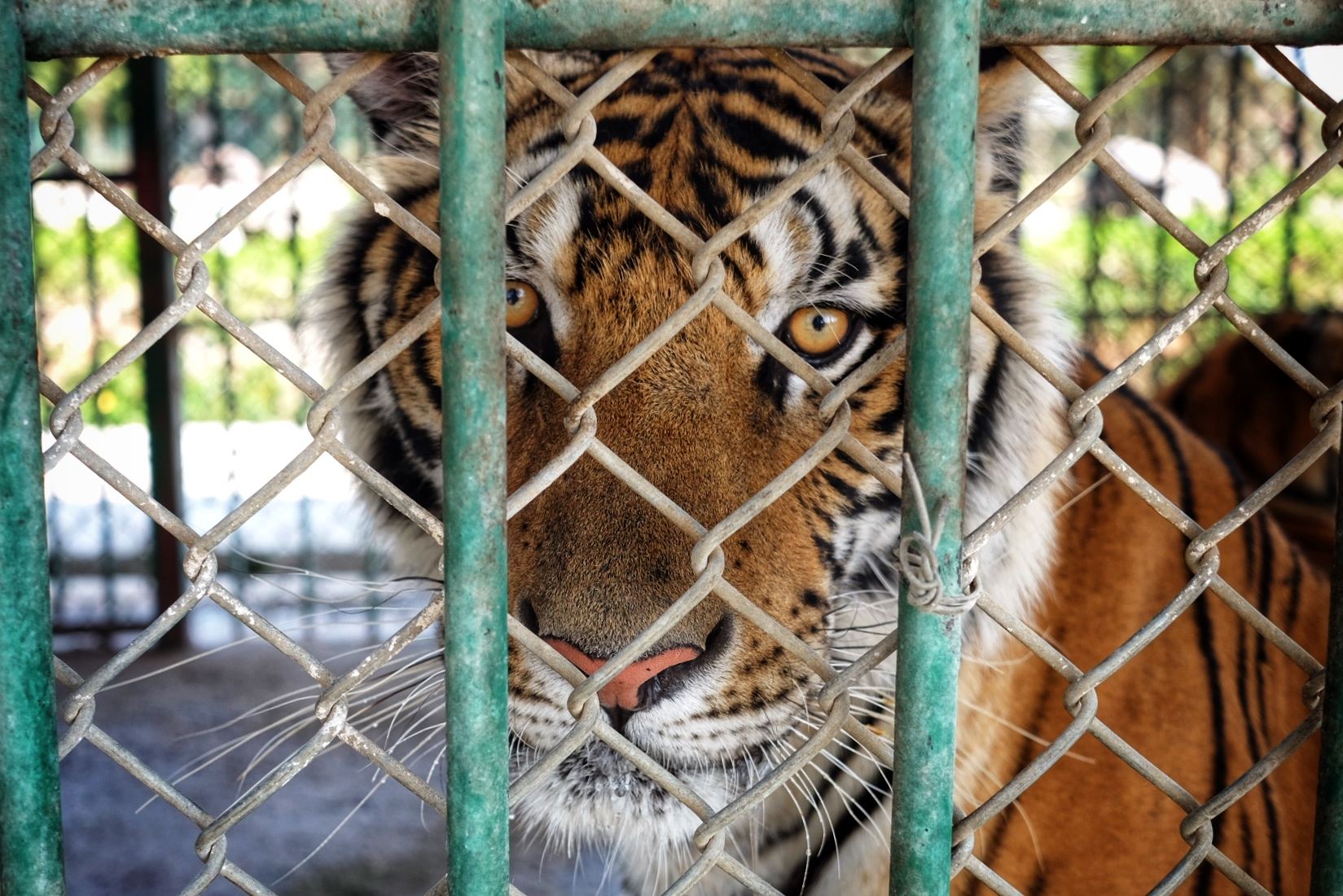 pros of captive breeding