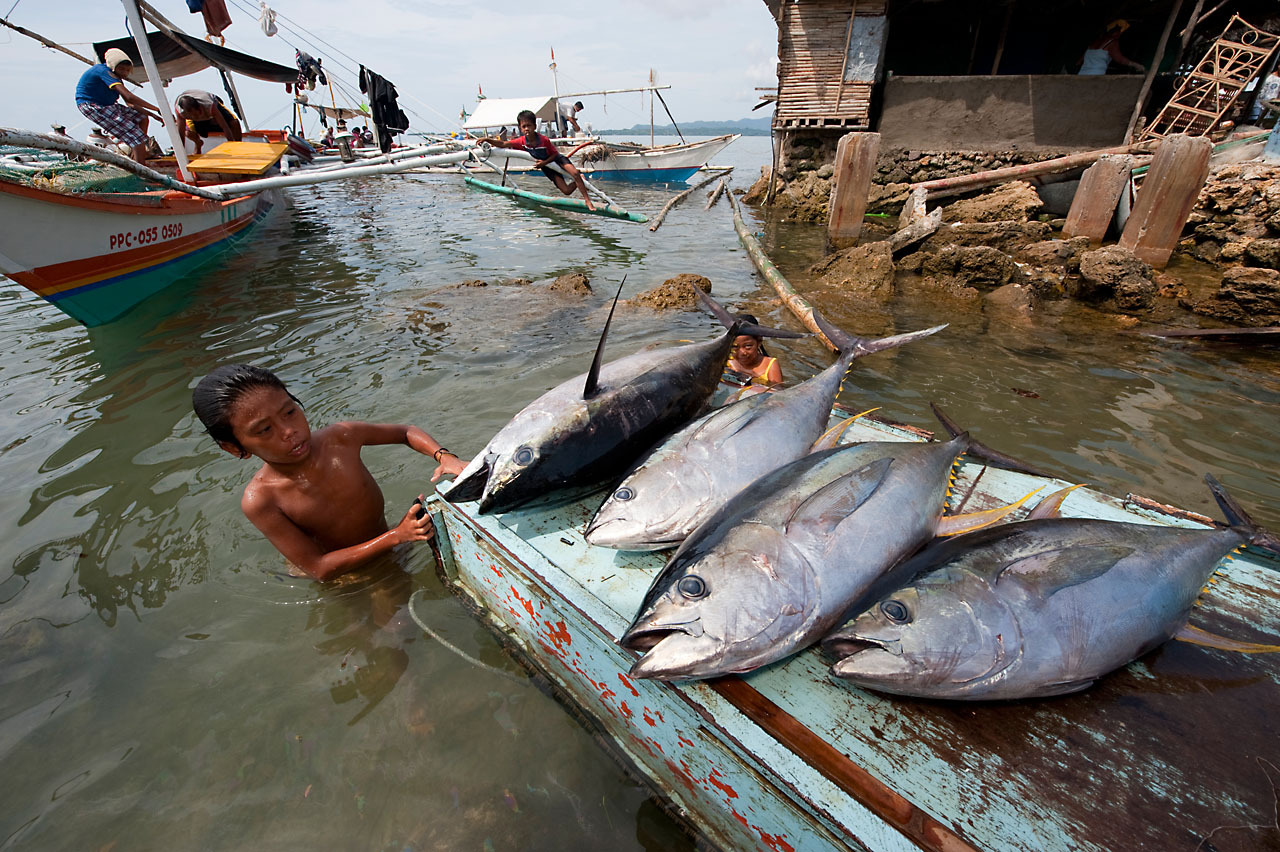 The seafood future of chonalyn the philippines 100 for Freund s fish