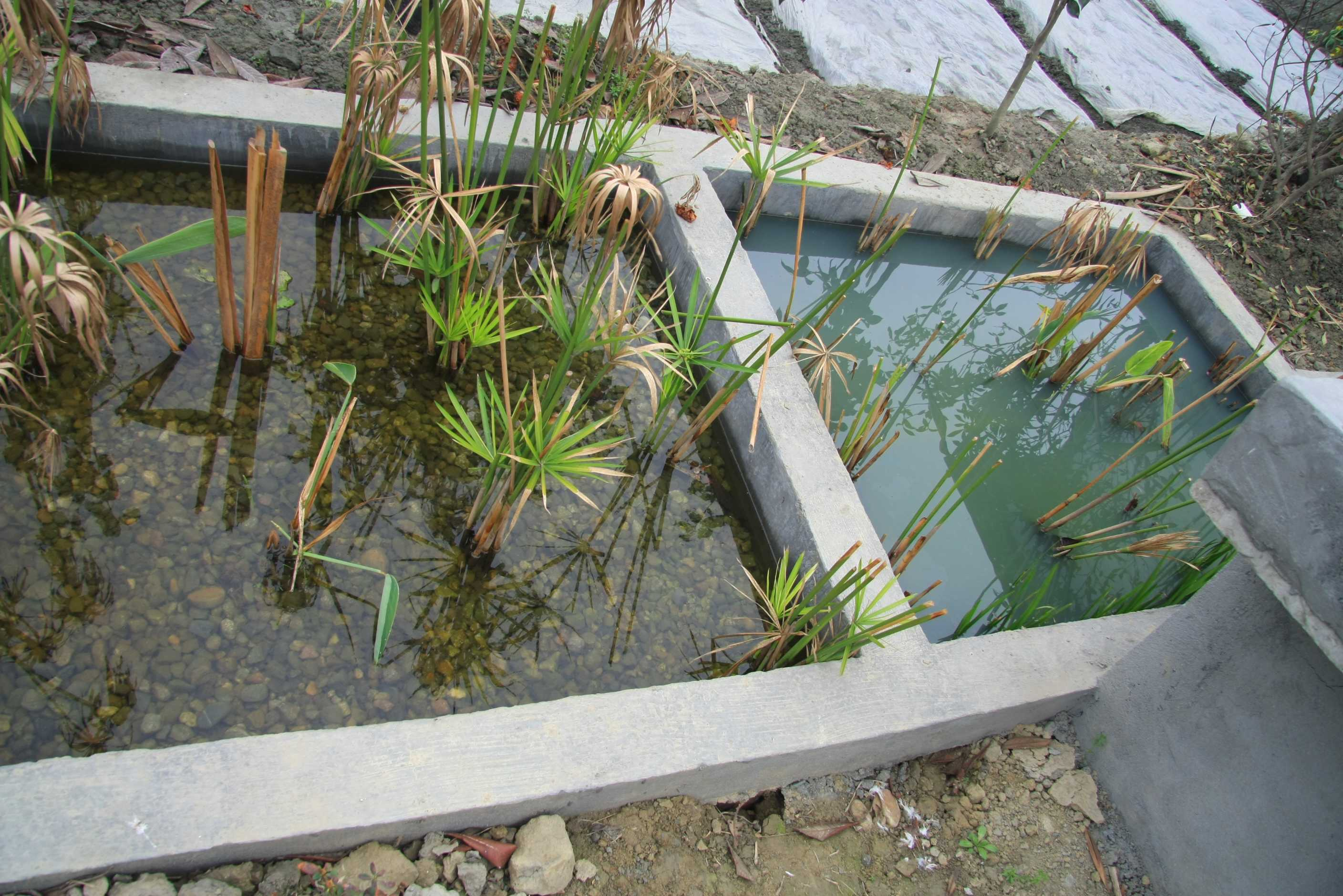 Can You Build On Wetlands
