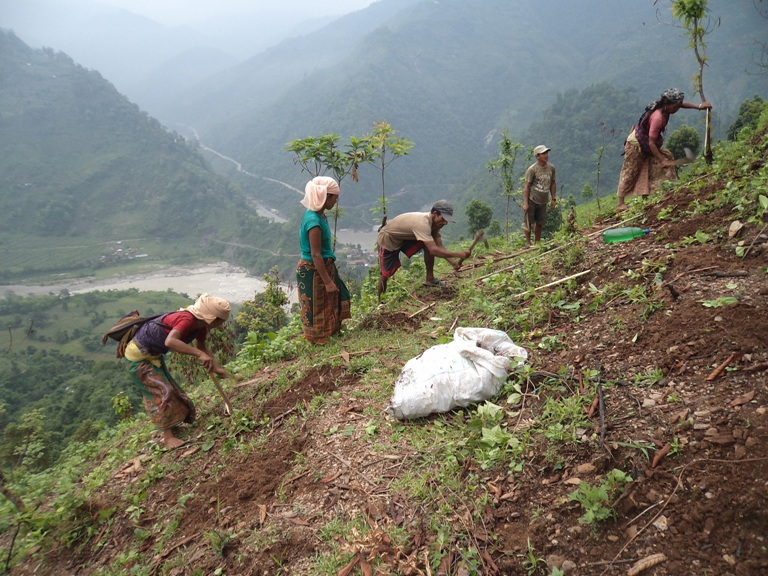 Rehabilitating land degraded by shifting cultivation | WWF