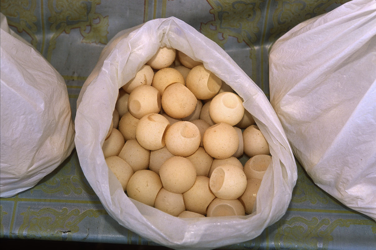 Turtle eggs for sale