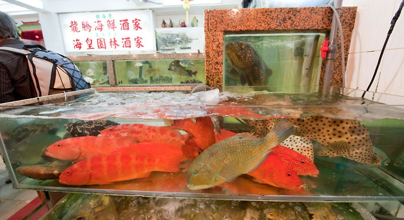 Wwf welcomes hong kong trawl ban wwf for Freund s fish