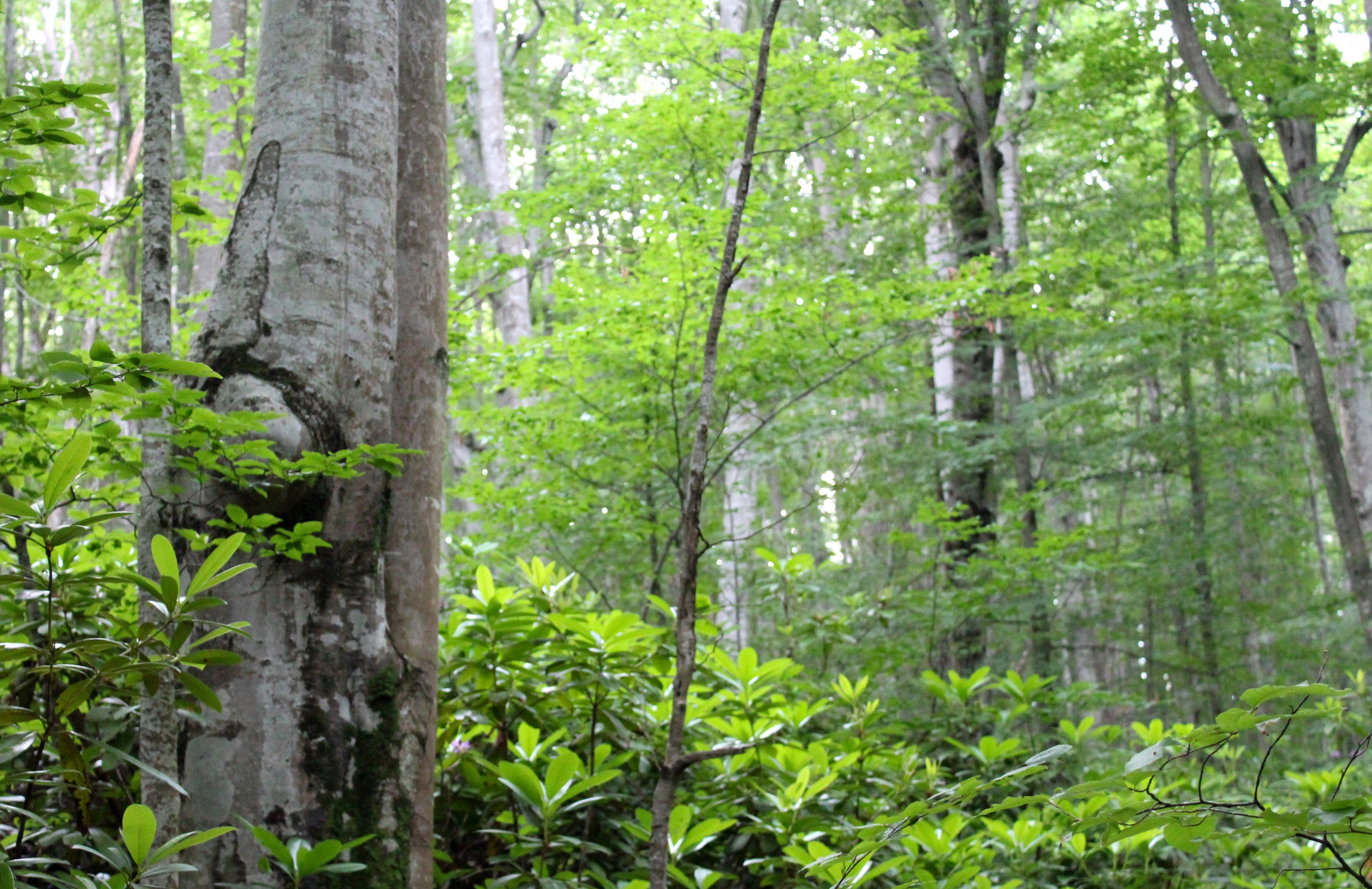 Virgin Forests: WWF Saving the Last Remaining in Europe, Part 1 | WWF