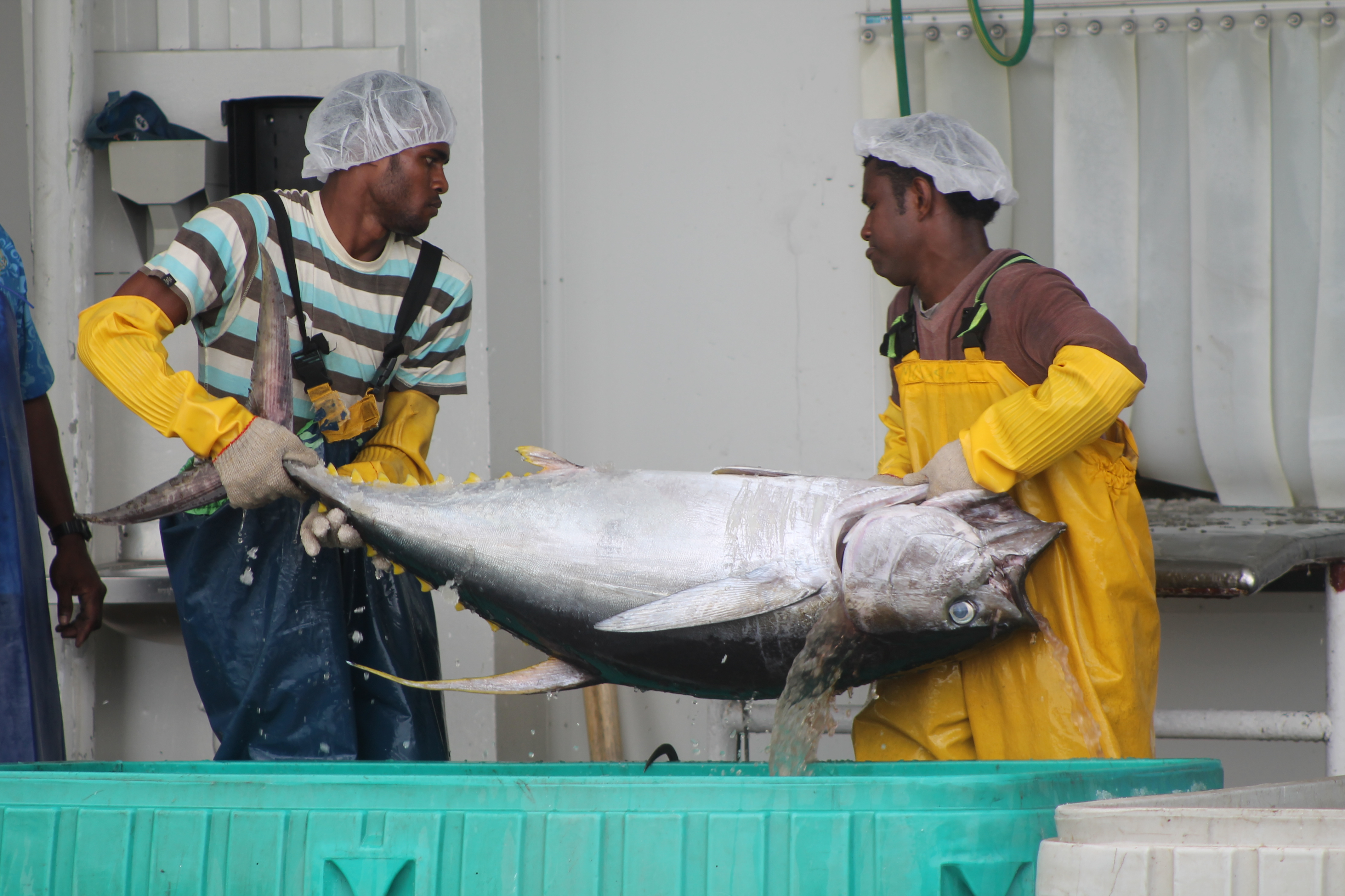 Fiji 39 s path to a sustainable fishery wwf for Pacific fish company