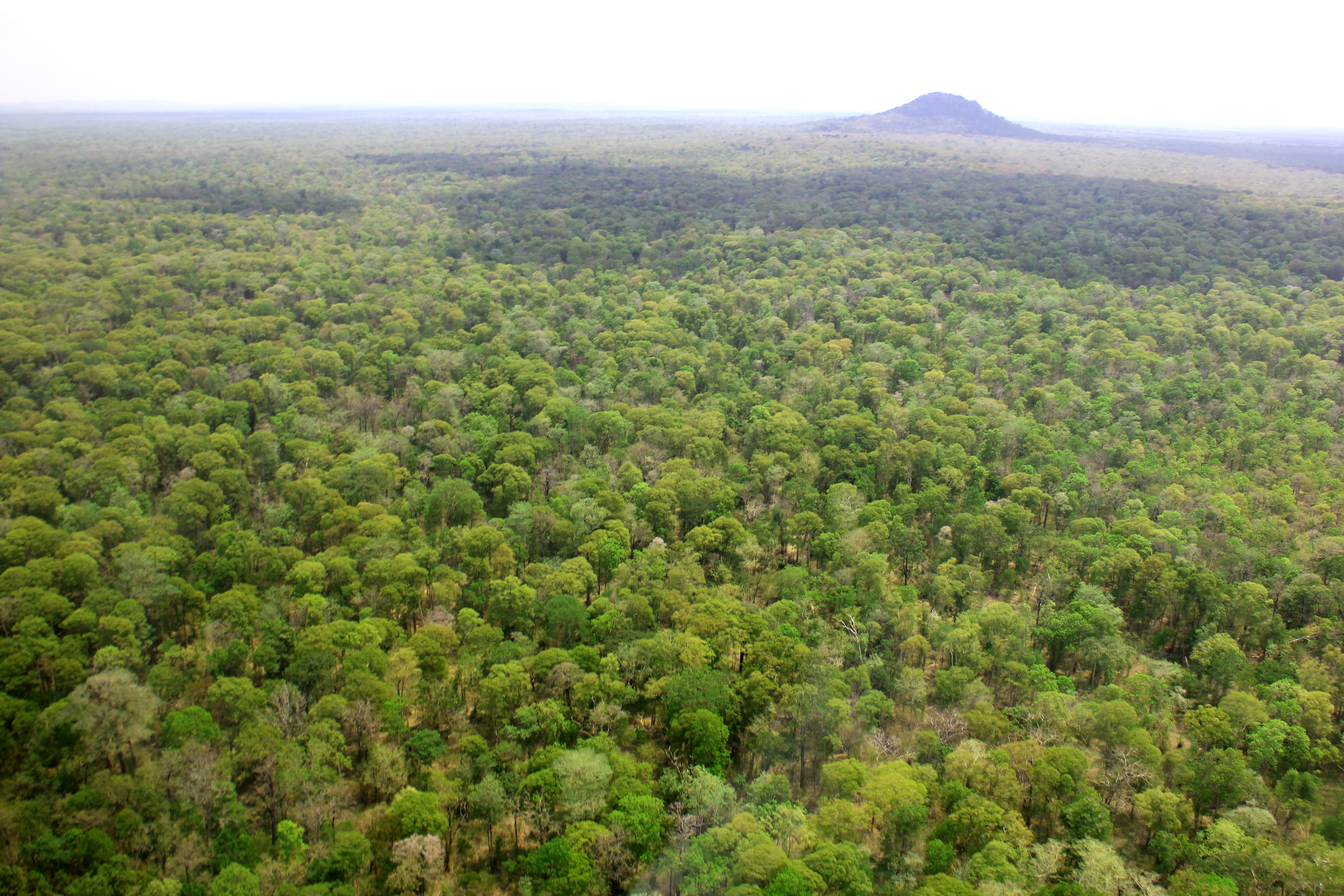 cambodia s natural resources About cambodia's environment, including information about forests and environmental issues.