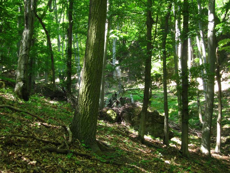 Csarna-valley, the largest intact forest in Hungary.