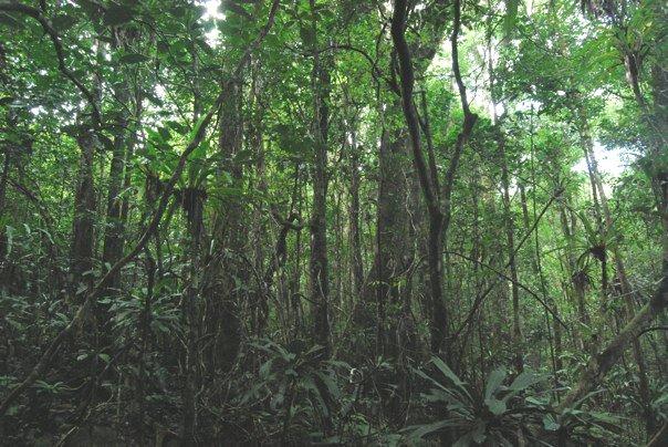 UNESCO recognizes threats to Madagascar rainforest | WWF