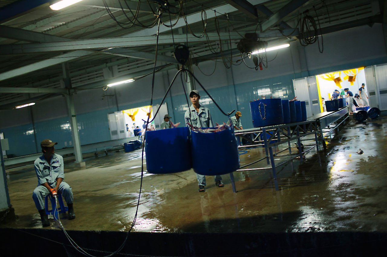 Wwf certifying sustainable shrimp farming practices in for Fish farming business
