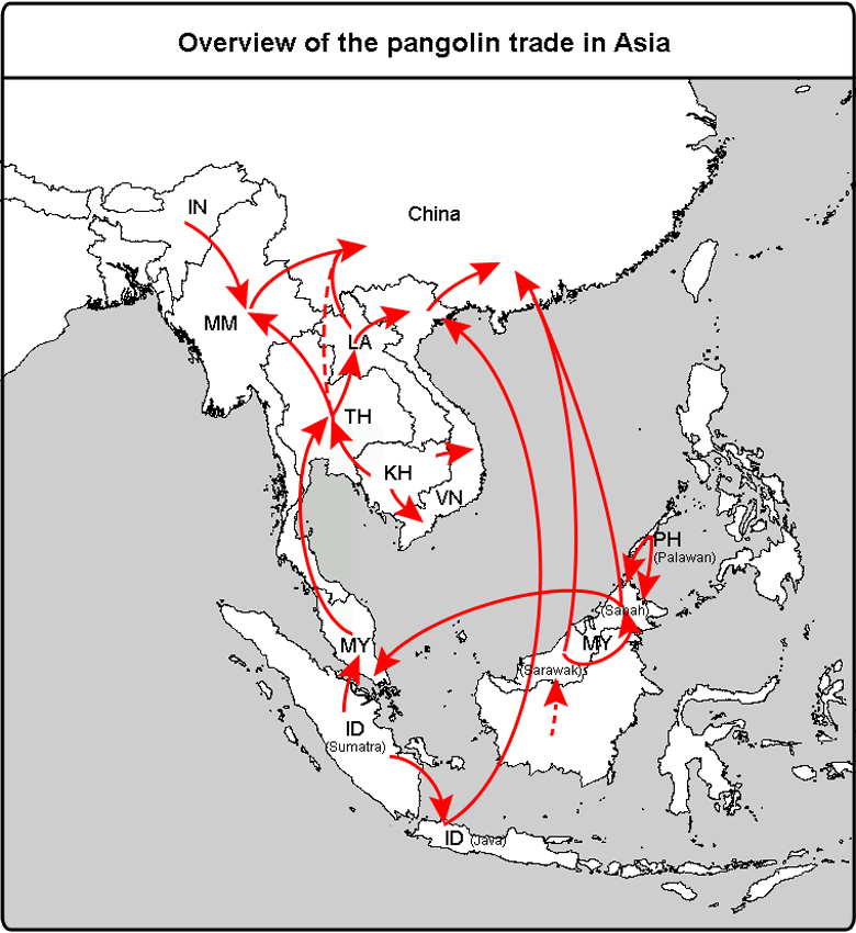 Pangolin trade map.