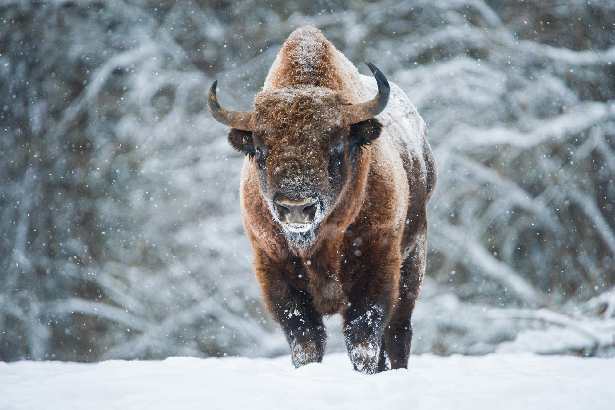 Rare animals of Russia and the world. The rarest animal in the world 28