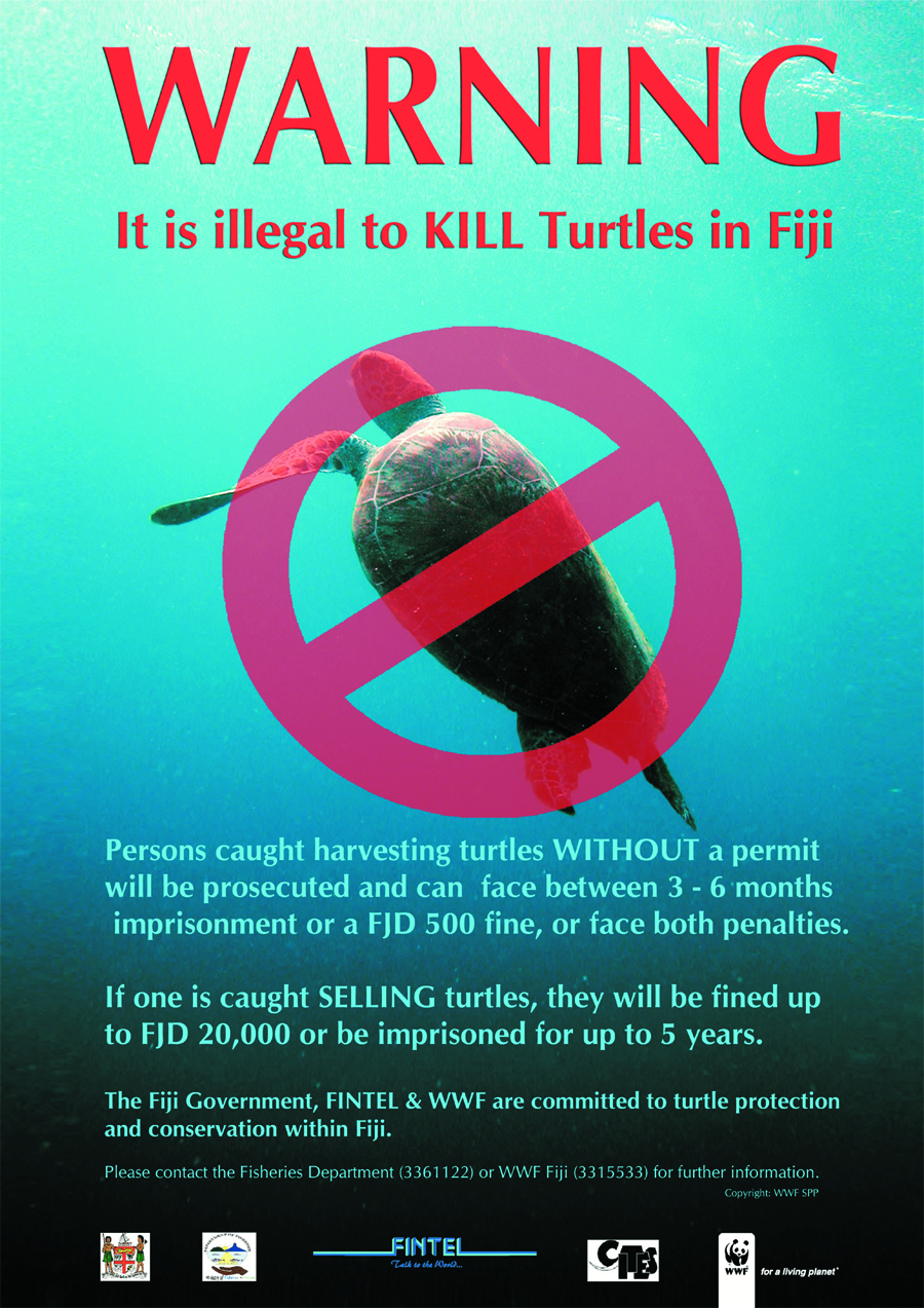 poster  turtle warning