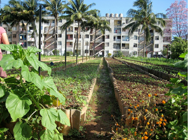 havana urban farming wwf
