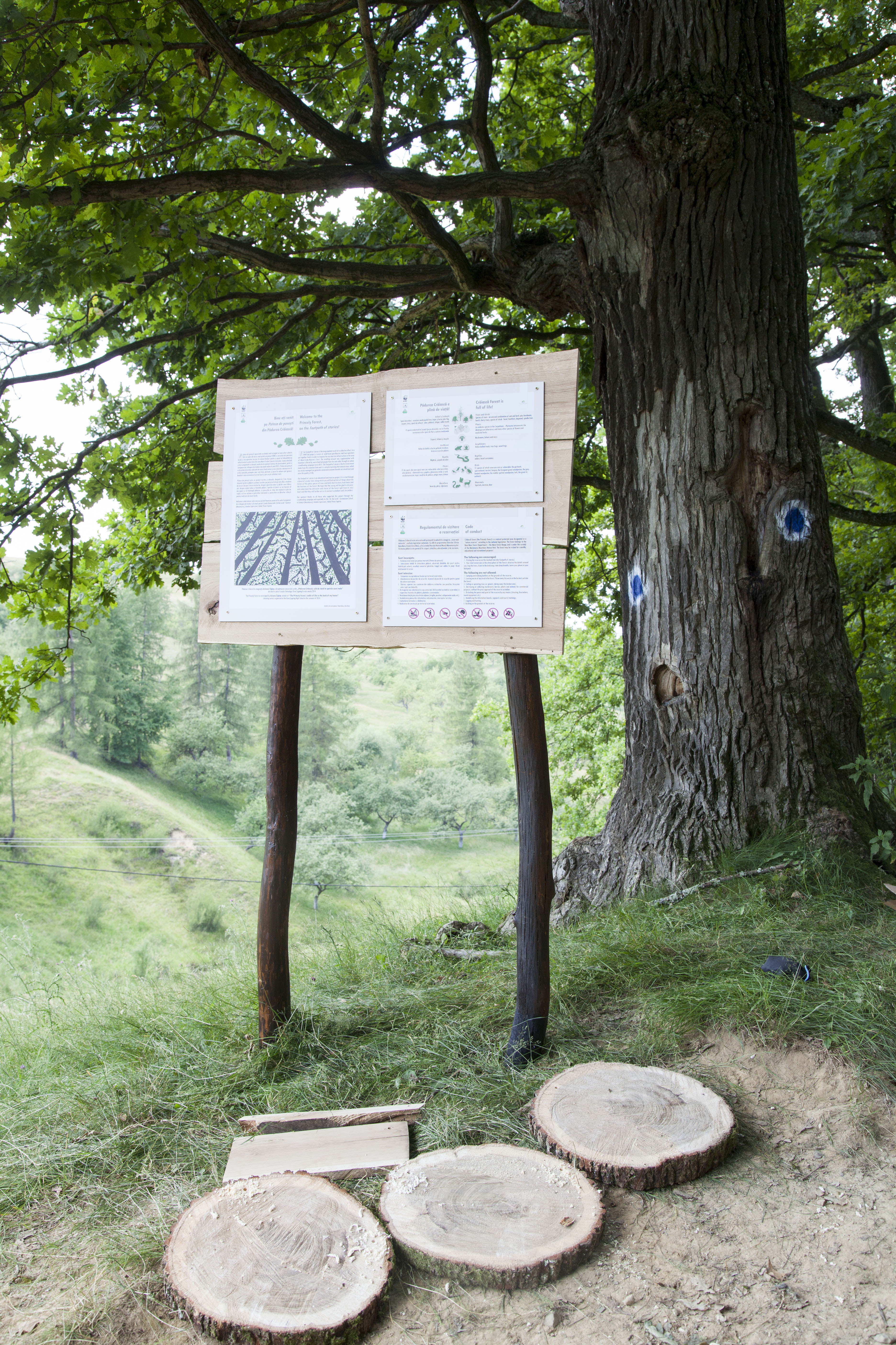 Intrarea în pădure și primul panou informativ