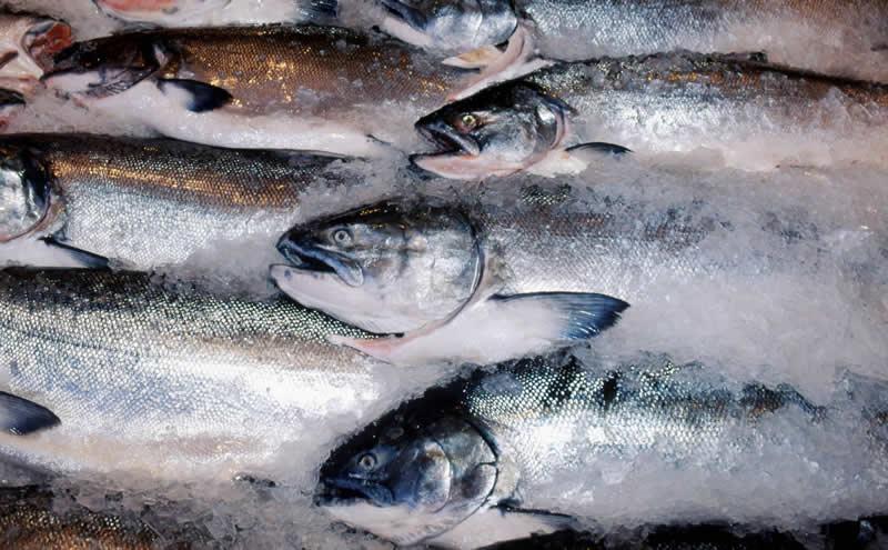 Frozen salmon © WWF / Kevin Schafer