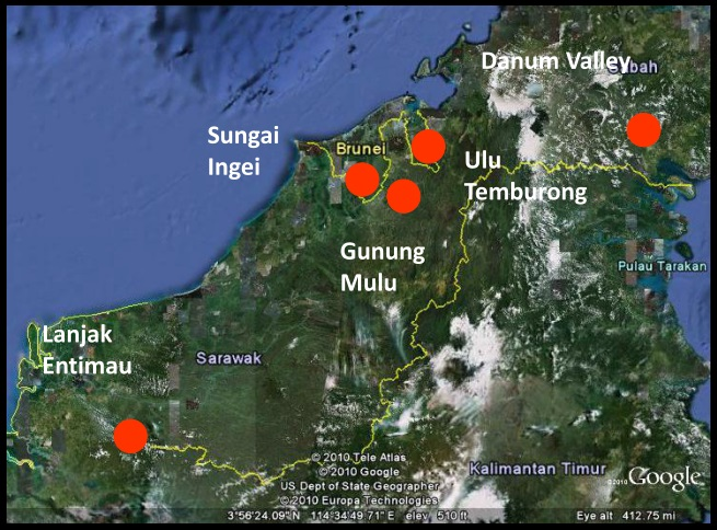 New species discovered in bruneis heart of borneo region wwf related links gumiabroncs Choice Image