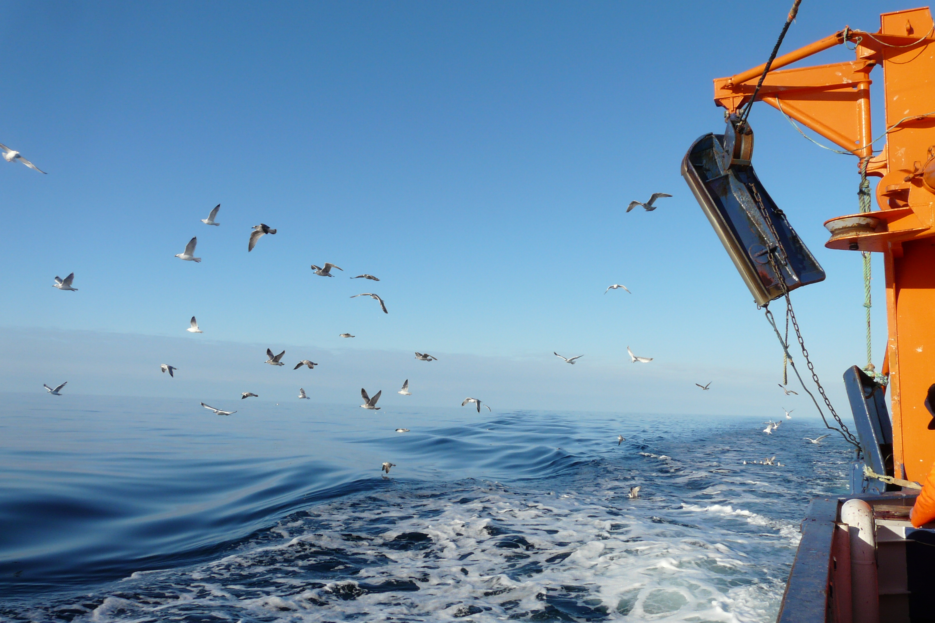 Wwf welcomes improved msc fisheries standard wwf related links xflitez Choice Image
