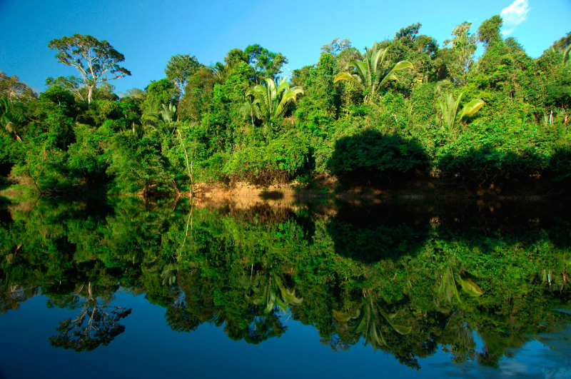 Scientists Back Rethink Of Brazil Forest Law But With - Natural resources of brazil