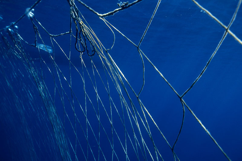 Fishermen's nets set out to corral Northern bluefin tuna (Thunnus thynnus) during the migration, Mediterranean Sea.