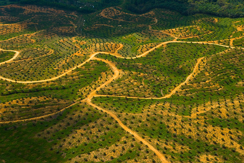 Aerial view of palm oil plantation on deforested land, Sabah, Borneo, Malaysia