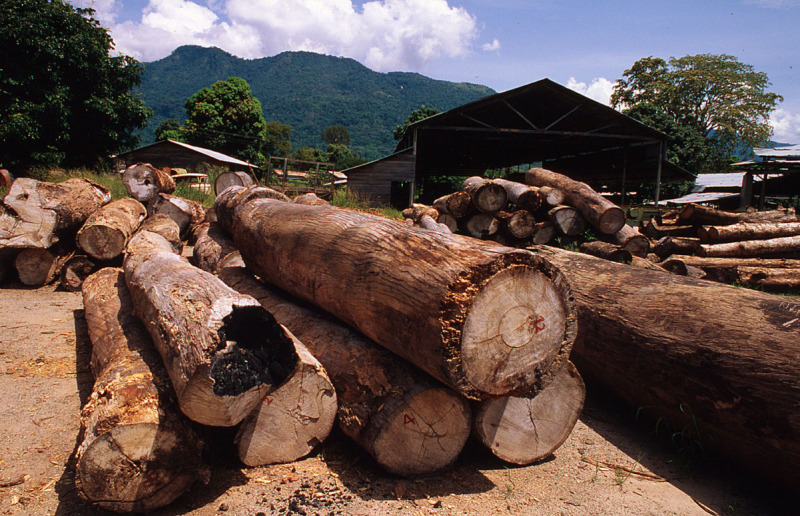 Image result for timber  in french guiana