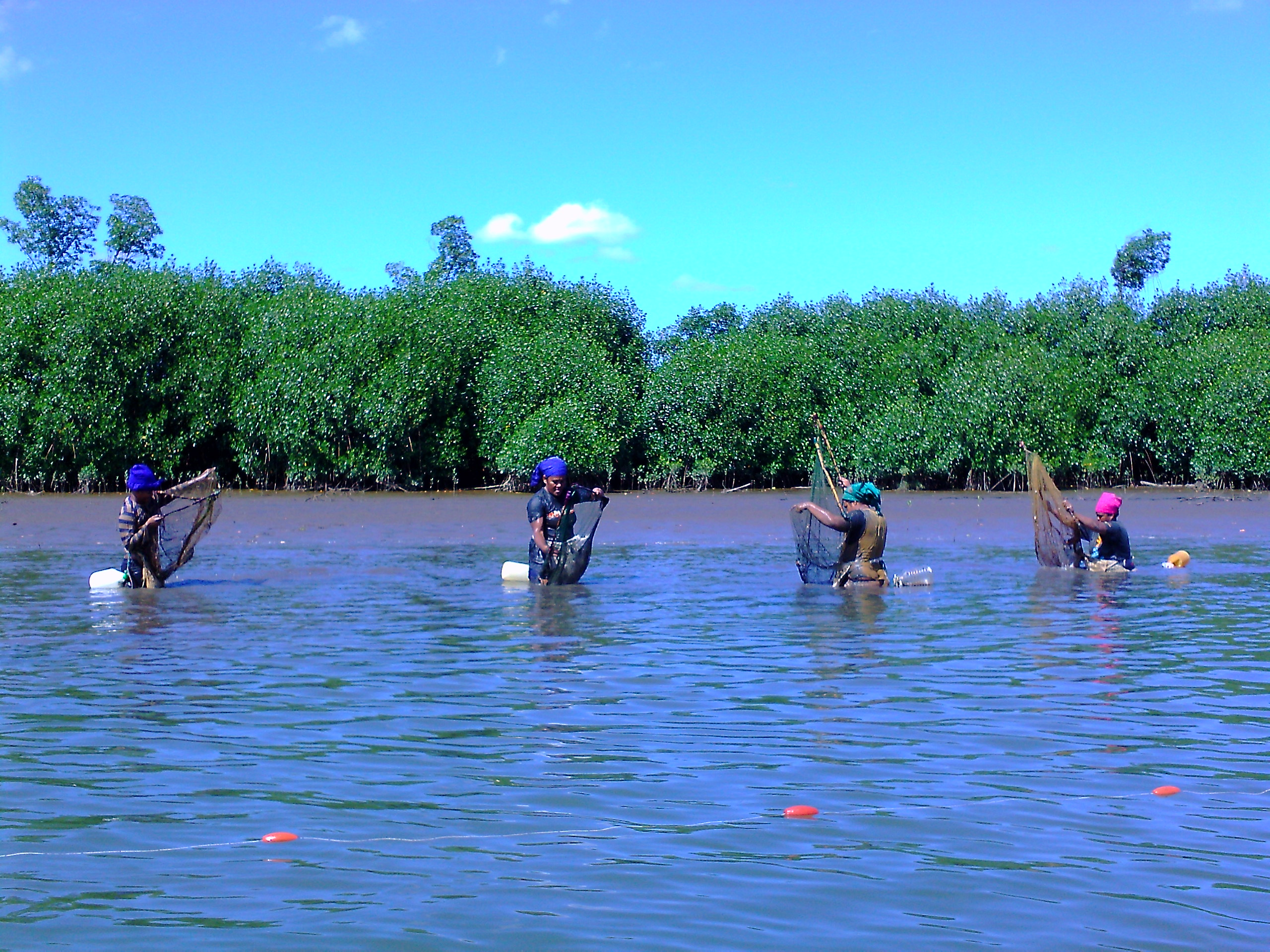the field studies of the mangrove Field studies in biodiyersity 1 20 ii phase so slightly more light, less humid, slightly warmer and with o learn character,istics of a mangrove ecosystem o observe the diversity of its constituent flora and fauna habitat.