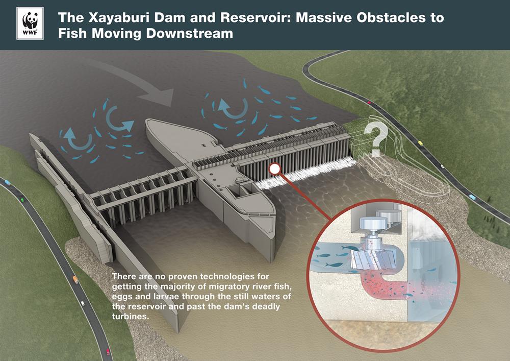 ngos set one year deadline to stop xayaburi dam wwf bonneville dam fish ladder camera fish ladder dam diagram #50