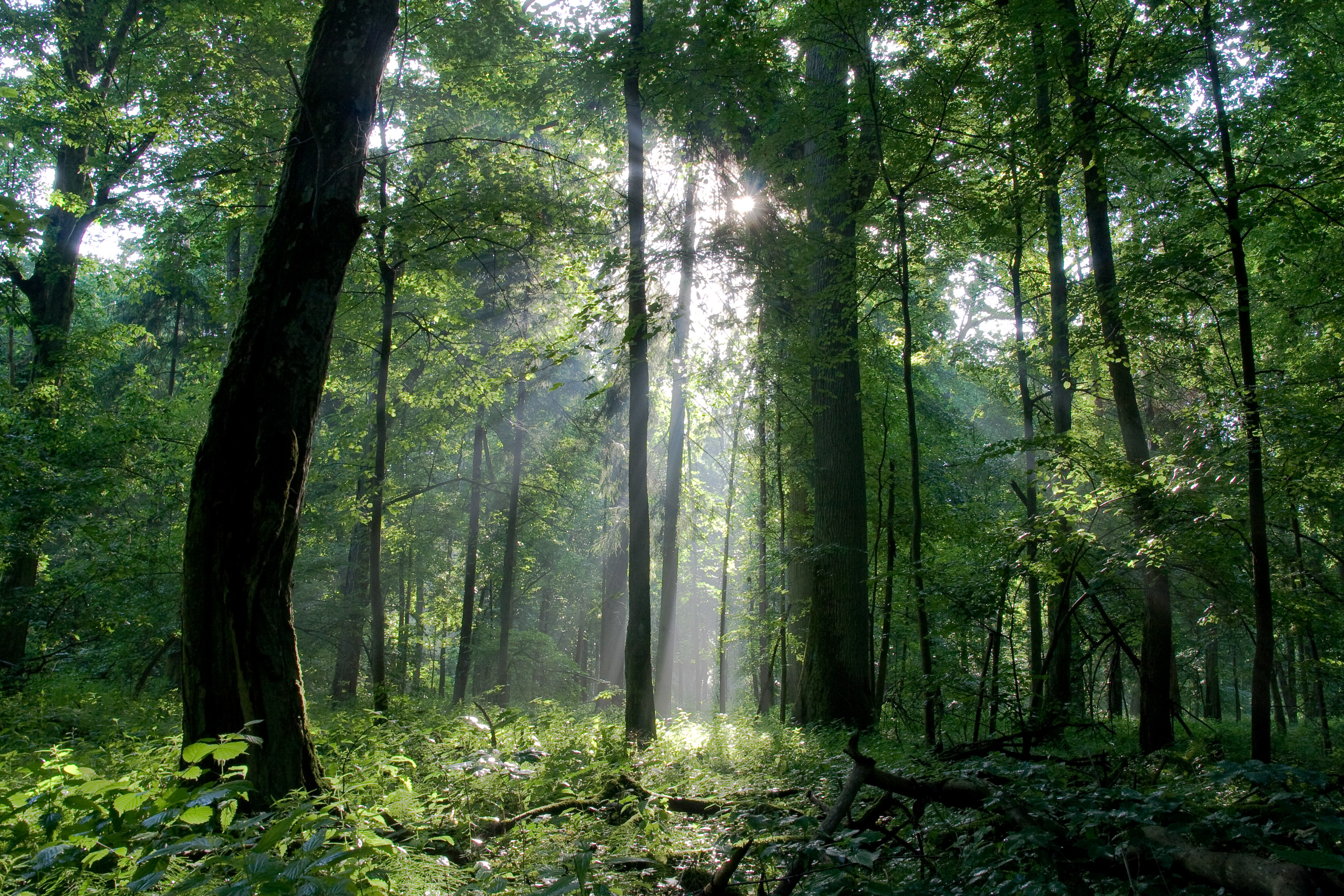 Eu Bioenergy Proposals Threat To Climate And Sustainable