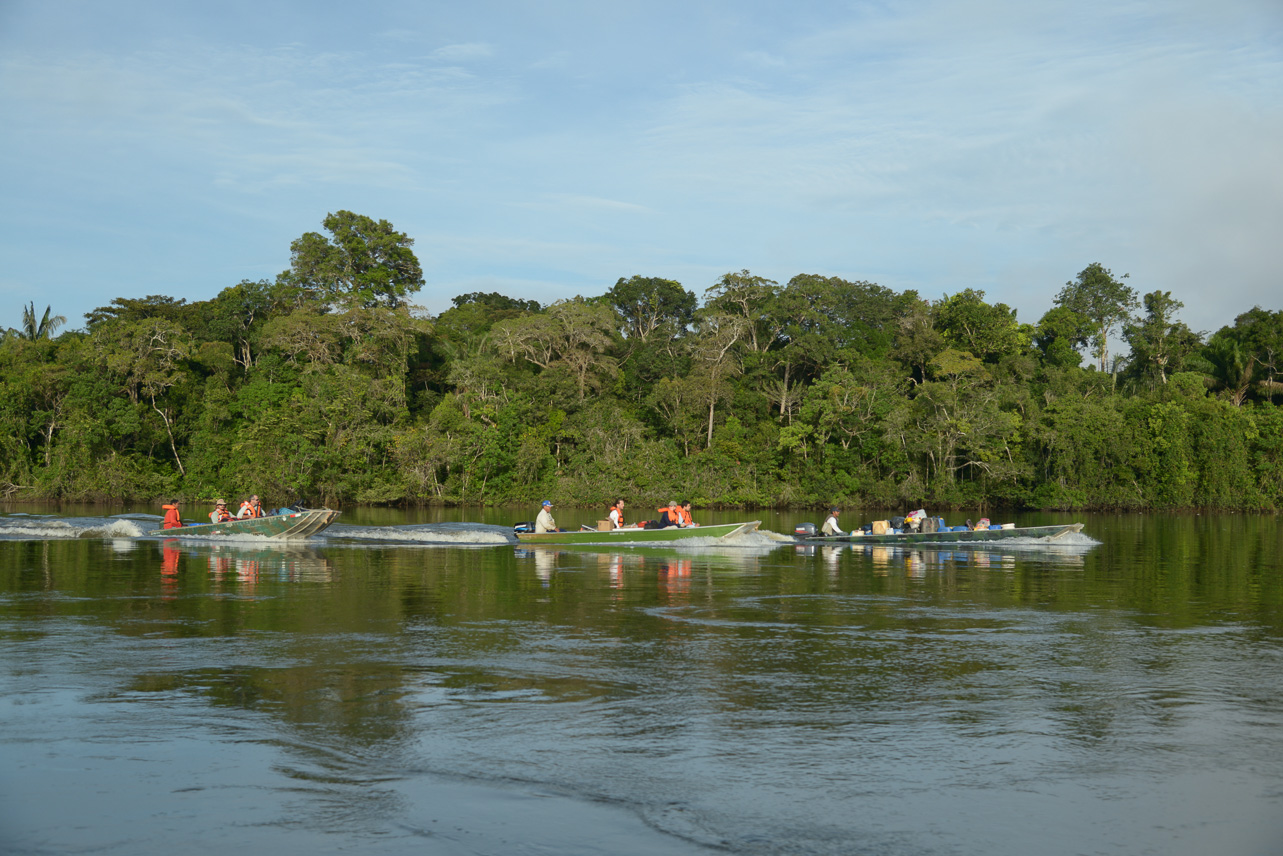 381 new species discovered in the amazon wwf for Koch yamaguchi