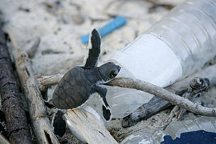 For me, plastic pollution is the image of a sea turtle suffocating and struggling, his head in a bag