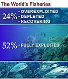 52% of the world's fisheries are fully exploited  	© WWF