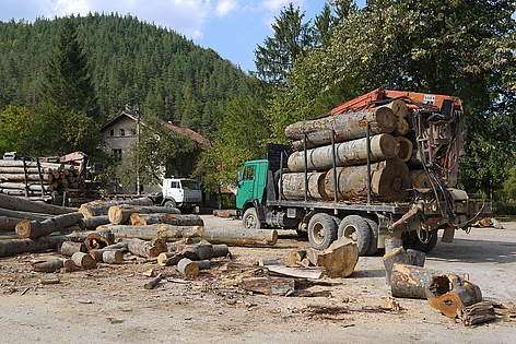 Typical logging station in the forests of Bulgaria rel=