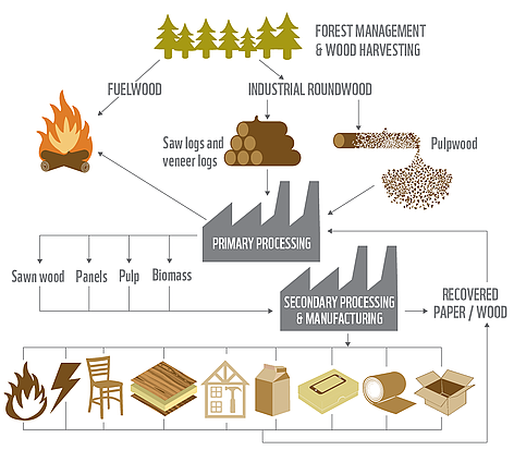 Forestry how to wirte a paper