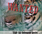 Top 10 'Most Wanted' Endangered Species in the market of Golden Triangle