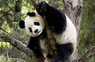 © WWF / Bernard DE WETTER