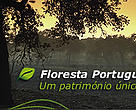 Portuguese forests - a unique heritage