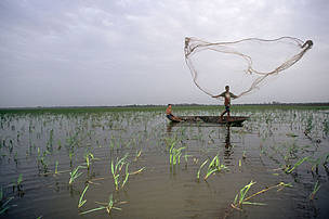 A fisherman casts his fishing net in the shallow lakes of the varzea, Para, Brazil