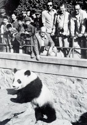 History of panda conservation | WWF on aspca panda, giant panda, biggest panda, japan panda, anime panda, animals panda, funny panda, cartoon panda, national wildlife federation panda, red panda, weed panda, huge panda, world wildlife fund panda, baby panda, wtf panda, african panda, enjoi panda, very cute panda, sad panda, bubble panda,