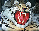 A tiger skin said to originate from India on sale in Tachilek, market, Myanmar, close to the Thai border.