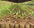 Production of native species seedlings.