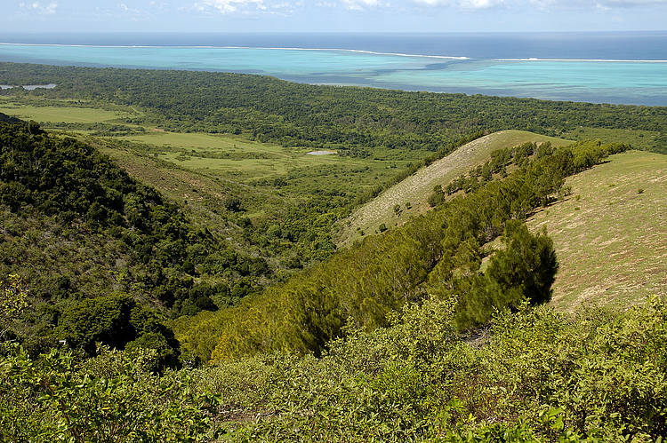 New hope for New Caledonia's dry forest