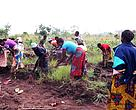 Women doing agriculture in the DRC