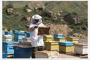 Beehives with bee families donated to communities