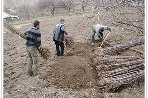 Establishment of fruit orchards in communities of Gnishik PL
