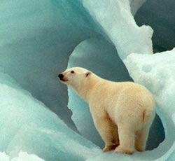The Barents Sea provides unique Arctic habitats for many species, including polar bears. / ©: WWF-Canon / Wim VAN PASSEL