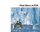 Polar Bears at Risk
