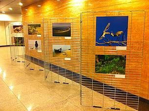 "Images from ""The Danube Delta, Endangered Beauty"" held at the European Parliament."
