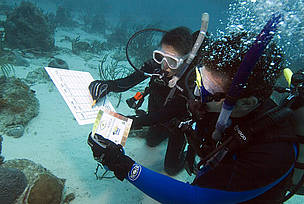 Divers assess the colour of the coral as part of Project AWARE's CoralWatch Project. The project monitors coral bleaching around the world.